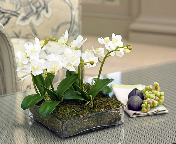 Orchids in a planter create a unique style and design